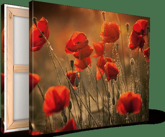 Foto op canvas met rode klaprozen