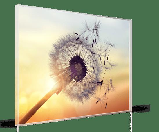 foto op plexiglas afdrukken acrylglas. Black Bedroom Furniture Sets. Home Design Ideas